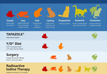 Infographics for veterinarians